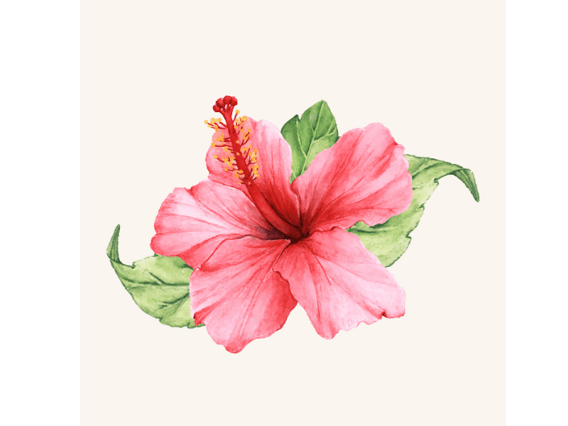 Hibiscus Extract For Hair Growth