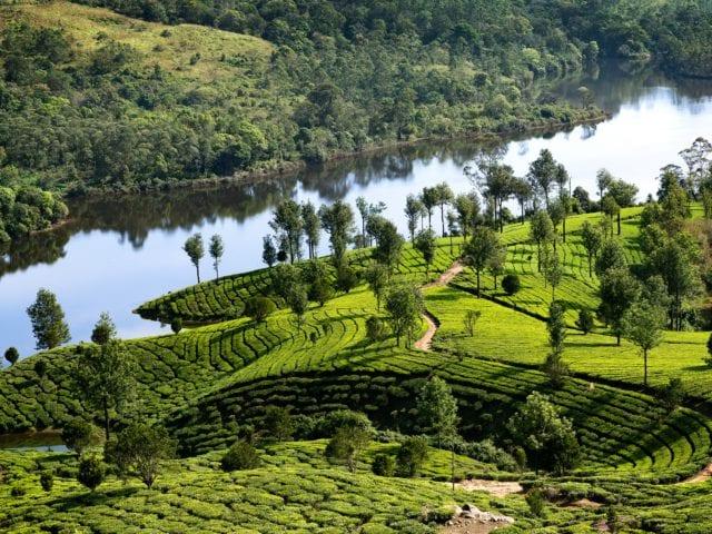 Munnar - Must Visit Scenic Destination In India
