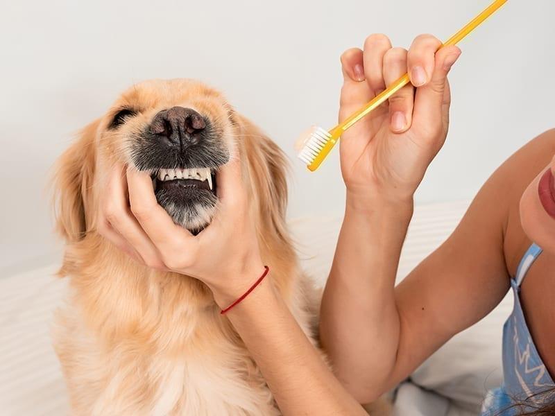 Dog Grooming At Home