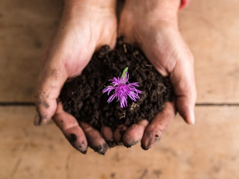 Steps To Make Compost At Home